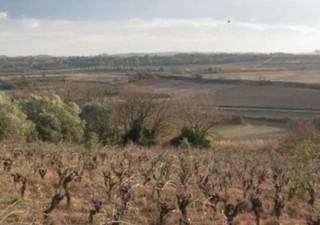 CAUX - Terrain de loisir arboré de plus de 16000 m², situé à flan de colline de ce joli village pitt [...]